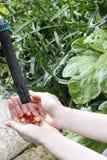 Woman washing wild strawberries Stock Photo