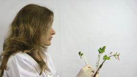 Woman  watch buckwheat sprout in chemistry test tube flask stock footage