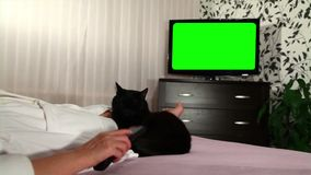 Woman watches green screened TV. Woman watches television with green screen / shot behind model's shoulders stock video