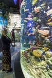 Woman watching aquarium Dubai stock photography