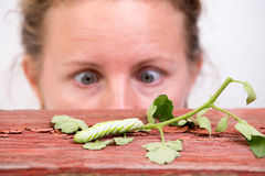 Woman Watching A Caterpillar Stock Image