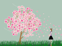 Woman is watching cherry blossom tree. Vector graphic Royalty Free Stock Photos