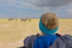 Woman watching herd of elephants on african wildlife safari. Amboseli, Kenya. Woman on african wildlife safari, Amboseli national park, Kenya. Lady watching royalty free stock images