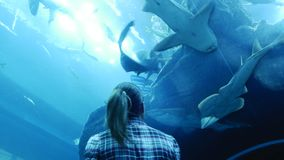 Woman is watching the life of the inhabitants of the aquarium. Woman is watching the life of the inhabitants of the Dubai aquarium stock video footage