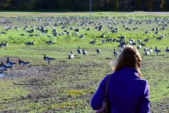 Woman watching birds royalty free stock image
