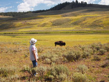 Woman watching a North American Buffalo Grazing in Field with ri Stock Photography