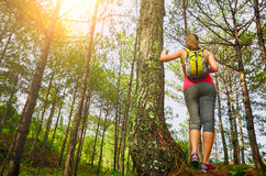 Woman watching pine forest. Focus on traveller Royalty Free Stock Photo