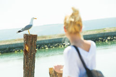 Woman watching seagull in summertime. Royalty Free Stock Image