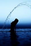 Woman in water waving hair. Royalty Free Stock Image