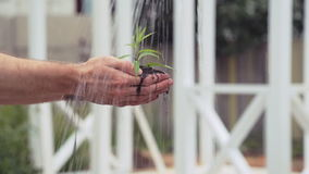 The woman watered a young sprout in male hands. Close-up stock video footage