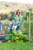 Woman Watering Allotment Royalty Free Stock Images