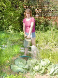 Woman watering cabbage Royalty Free Stock Photography