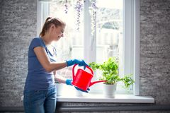 Free Woman Watering Flowers At Home Royalty Free Stock Images - 113006619