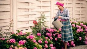Woman watering flowers in a beautiful flower garden. Happy and smiling woman cares for plants in the garden. Concept of. Cultivation of hydrangeas stock video