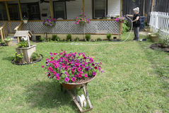 Woman watering flowers in front yard. With wheel barrow full of flowers and a wishing well with flowers Stock Photography