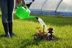 Woman watering flowers Royalty Free Stock Image