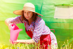 Woman watering flowers in garden Stock Photography