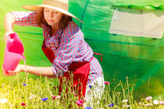 Woman watering flowers in garden Royalty Free Stock Photos