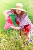 Woman watering flowers in garden Stock Photos