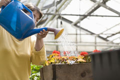 Woman Watering Flowers In Greenhouse Royalty Free Stock Photography