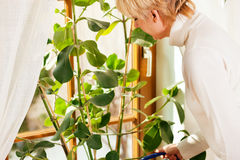 Woman watering the flowers at home Royalty Free Stock Images