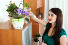 Woman watering  flowers in pots at home Stock Image