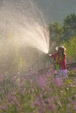 Woman watering garden. Woman watering a garden of purple flowers Royalty Free Stock Photography