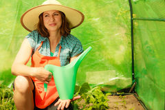 Woman watering green tomato plants in greenhouse Royalty Free Stock Photo