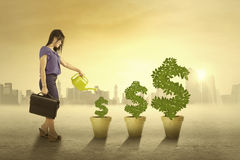 Woman watering the money trees outdoors Royalty Free Stock Photos