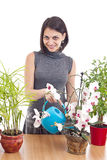 Woman watering orchid Royalty Free Stock Photo