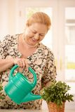 Woman watering plant Royalty Free Stock Photography