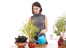 Woman watering a plant Stock Image