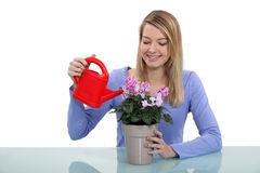 Woman watering plant Stock Image