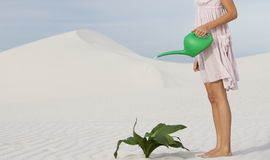 A woman watering a plant in the sand Stock Image