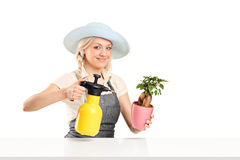 Woman watering a plant seated at table Stock Photos