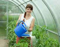Woman watering plants Royalty Free Stock Photography