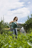 Woman Watering Plants In Allotment Royalty Free Stock Image