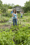 Woman Watering Plants In Allotment Royalty Free Stock Photos