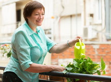 Woman watering plants on balcony Stock Images