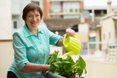 Woman watering plants on balcony Royalty Free Stock Image
