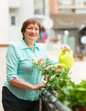 Woman watering plants on balcony Royalty Free Stock Photos
