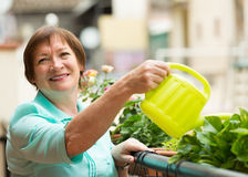 Woman watering plants on balcony Royalty Free Stock Photo
