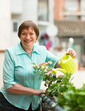 Woman watering plants on balcony royalty free stock photography