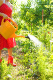 Woman watering the plants Royalty Free Stock Photography