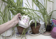 Woman Watering Plants royalty free stock photos