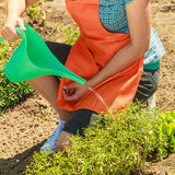 Woman watering plants in garden Royalty Free Stock Photos