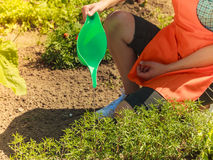 Woman watering plants in garden Royalty Free Stock Image