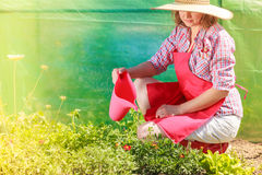 Woman watering plants in garden Royalty Free Stock Images