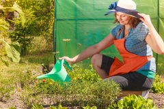 Woman watering plants in garden Stock Photos