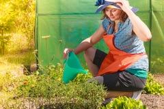 Woman watering plants in garden Royalty Free Stock Photo